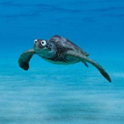 The  new ad of  Wonderbra Swinwear. I LOVE the eyes and the smile of the turtle!