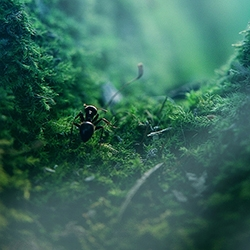 The Ant Thriller by Oleg Zhukov is a beautiful series of macro photographs with a plot, and follows a little ant on its journey.