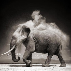 Truly magnificent monotone photographs of Africa's Big 5 and other African animals by Nick Brandt. View his portfolio called 'A Shadow Falls'