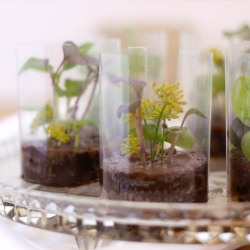 Tiny (and edible) chocolate terrariums. Almost too pretty to eat.