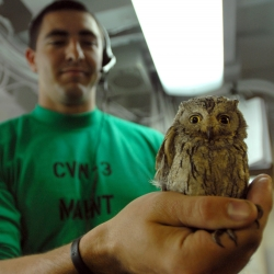 "Cute screech owl stowed away on an aircraft carrier and nursed back to health by Zachary Gorman, an aviation mechanic who happens to be a licensed falconer. ""Fod"" - foreign object debris"