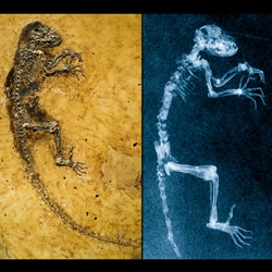 Meet Ida, the small 'missing link' fossil that created a big media splash and will likely continue to make waves among those who study human origins.