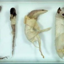 Danish artist Iris Shieferstein's series 'Life Can Be So Nice' creates an interesting typography out of her deceased animals which have been put through the taxidermy process.