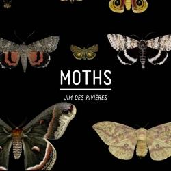 Jim des Rivières's gorgeous photos of Canadian moths.