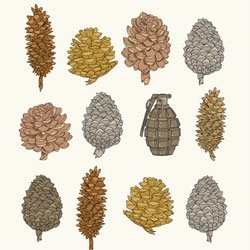 Beautiful Pine Cone print by Yasmine S. of A Print a Day...lots of great work to be found on her website.