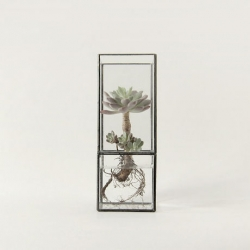 Beautiful cacti terrariums from [ 10¹² ] TERRA.