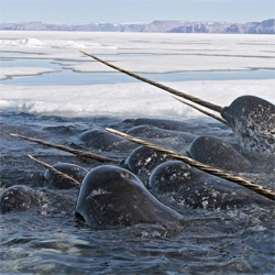 The Big Picture covers World Animal Day. The narwhal is a crazy mammal.