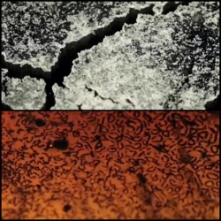 For the music video for French Cola by Itoa, film maker Kim Pimmel focuses his macro lens on hydrophilic polymers, quinoa, ABS plastic, instant coffee, acetone and more.