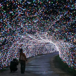 The Nabana no Sato theme park in Kuwana, Japan, has set up approximately 4.5 million flower-themed LEDs for the annual winter light show. The show is scheduled to run until 03/08/09.