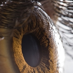 Amazing detailed photographs of human eyes by Suren Manvelyan. EYES AS YOU'VE NEVER SEEN BEFORE...