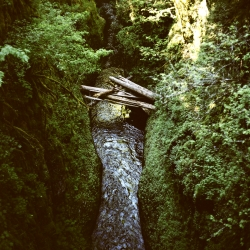 Eagle Creek, a runoff of the Columbia River Gorge, as photographed by Megan Kathleen McIsaac with her Mamiya C330.