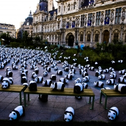 WWF pandas invades Paris - Campaign to highlight the urgent need to protect the vanishing species