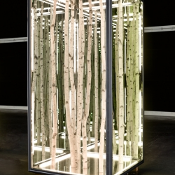 Los Angeles artist Anthony James produces works with two-way mirrors and birch trees, generating the illusion of an infinite forest, tranquil yet permanently inaccessible.