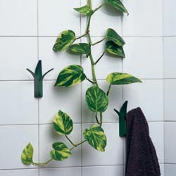 GREEN REVOLUTION is a hanger with the form of a plant. It reminds the grass blades that grow between tiles. A piece of nature invades the bathroom filling it with fresh air.