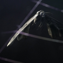 Loom, an absolutely beautiful, dark and almost tactile visual story of struggle; A moth being caught in a spiders web. Struggling for an escape, the moth's panicked movements only lessen its chance of survival.