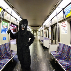 Nothing is more amusing than a time-lapse video documenting the evening of a man in a gorilla suit. Great score, absurd premise and worth the watch.
