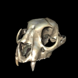 3DMuseum.org allows you to view its collection of scanned animal skulls in full 3D.