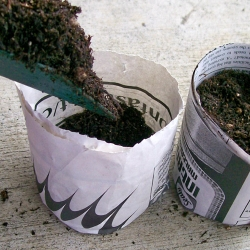 Biodegradable seedling pots from newspaper are made from strips of newspaper and don't have to be removed before planting.