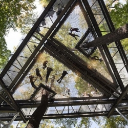 Walk Through Treetops. High in the sky, walking along elevated platforms and suspension bridges that connect one tree to another,  you can get a bird's-eye view of the ecosystem in the canopies of trees.