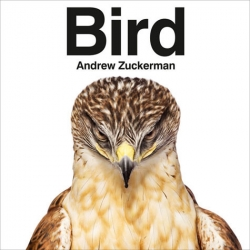 Andrew Zuckerman's upcoming book is BIRD ~ i can't wait to see this one, Creature still blows my mind.