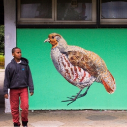 Street artist, ATM is decorating Britain's streets as a rallying call to help protect our treasured birds that now feature on the endangered list.