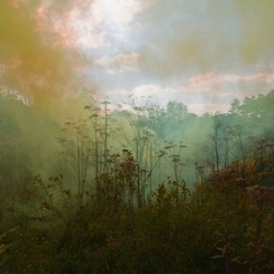 Smoke and trees: the eerie and beautiful photography of Amelia Bauer from her Smoke Signals series.