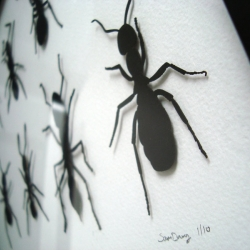 Laser cut paper ants, framed for your wall. Available from www.cutoutpaper.com