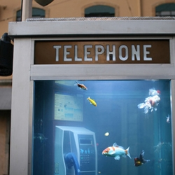 As part of the Lyon Light Festival in France, artists Benoit Deseille and Benedetto Bufalino transformed an phone booth into this amazing aquarium.