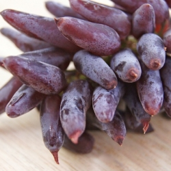 Have you ever seen a grape like this?  Witch Fingers are the hottest new grape!
