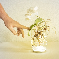 Aura is living interface that uses plants to control a lamp inside. Developed by german based designer Viktor Kölbig.