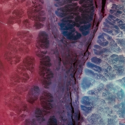 Ajay Malghan's cameraless photographs of Meat use color to abstract what we eat.