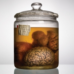 "Adam Voorhes beautifully documented a collection of rare human brains held at the University of Texas. The photos plus an essay from journalist Alex Hannaford are now available in the book "" Malformed: Forgotten Brains of the Texas State Mental Hospital"""