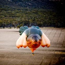 Blueboat has been working under strict secrecy with Patricia Piccinini and the Centenary of Canberra to share the story of the Skywhale with the world!