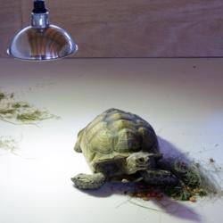 """""""Il vaut mieux éviter tout contact avec les formes de vie extra-terrestres"""" by the Japanese artist Shimabuku at the Centre International d'Art et du Paysage."""
