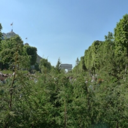 This weekend, the mythical Avenue des Champ Elysées was transformed into a small forest by artist Gad Weil. 8 000 plots of land, 4.2 million euros and 2 M visitors. See pictures and timelapse.