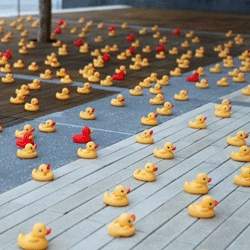 This morning, 1600 rubber ducks appeared on the plaza in front the Museum of Design Atlanta (MODA) as  a promotion for the new exhibition, WaterDream: the Art of Bathroom Design.