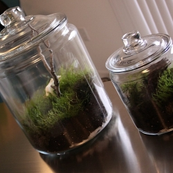 Make your own Mini Ecosystem for under $20