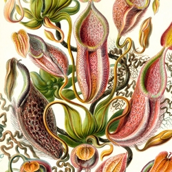 Beautiful biological drawings by Ernst Haeckel