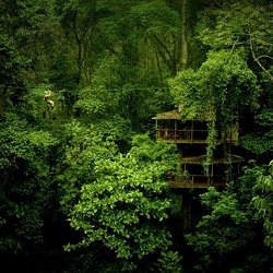 Take to the trees with off-grid tree house living at Finca Bellavista, Costa Rica.