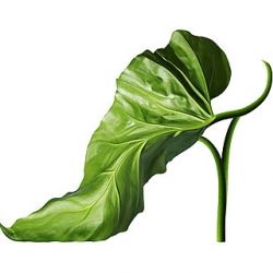 "Michel Tcherevkoff: ""Shoe-Fleur: A Footwear Fantasy"""