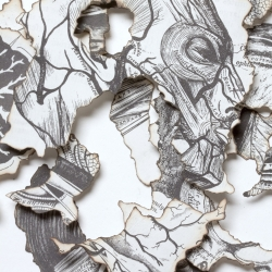 Burned paper art! meticulous hours burning the edges of paper, assemble into 3D compositions,  beautiful work with Gray's Anatomy and with a Superman comic. By Javier Mixco.