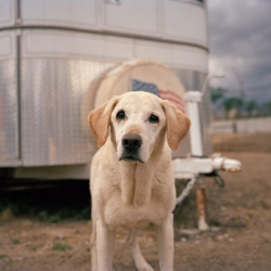Photographer Charlotte Dumas tells the story behind her portraits of 9/11 Rescue Dogs.