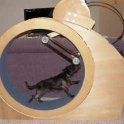 The HoundRound dog exercise wheel.  A giant hamster wheel for dogs!
