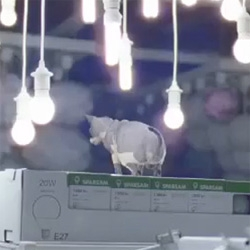 Herding Cats Experiment. A look behind the experiment of IKEA UK's release of 100 house cats into its Wembley store.