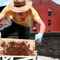 Urban Beekeeping: NYC is short documentary by Adrian Bautista, Martha Glenn, and Brooke Tascona. It focuses on the stories of Tim O'Neal, creator of Borough Bees, and Kazumi Terada, a novice beekeeper.