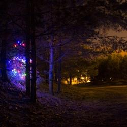 Landscape design studio Žalieji Sprendimai invited citizens of Kaunas to celebrate unofficial Christmas by making pop up Christmas trees all around the city.