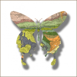 Joseph Warren is an artist who was inspired by the discovery that the textural effects typical of cartography bear an uncanny resemblance to the detailed patterns visible on highly magnified butterfly wings.