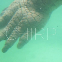 Had lost the link to the chirp website. Happy to share it now ~ Chirp Winter 2008 music download, and awesome video/coverart