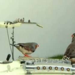 A landscape for the birds using bass guitars and Gibson Les Paul electric guitars as perches, and cymbals as feeders containing water and seeds.