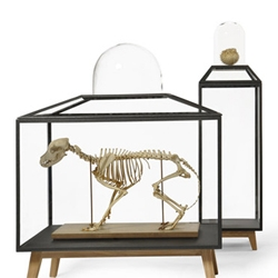 JSPR, a young Dutch interior design brand founded by Eindhoven graduate Jasper van Grootel revives the display cabinet. Available in different sizes and dimensions. Design by Sylvie Meuffels.